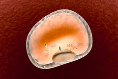 Fat Cell Stock Image