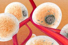 Fat Cells on human tissue Royalty Free Stock Images