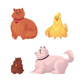 Fat, chubby cat, dog, chicken and hamster. Cartoon vector illustration  on white background. Overweight domestic animals, chubby pets, obese cat, dog, hamster Royalty Free Stock Photography
