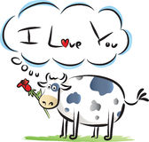 Fat cow say: i love you. A fat and cute cow with brown spot say : i love you Stock Images