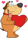 Fat Dog Holding Up A Red Heart Royalty Free Stock Images