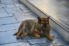 A fat dog lying on the sidewalk. With peace of mind stock photography