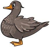 Fat duck Stock Photo