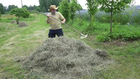 Fat farmer man rake dry grass hay. 4K stock video footage