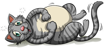 A fat gray cat. On a white background Stock Images