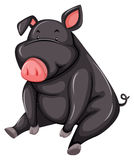 Fat gray pig Stock Images
