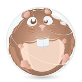 Fat Hamster  Royalty Free Stock Photography