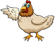 A fat hen Stock Images