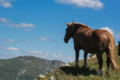 Fat horse. This I photographed on a hill near Lourdes Royalty Free Stock Image
