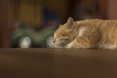 Fat kitty cat sleep on the floor. Royalty Free Stock Photo