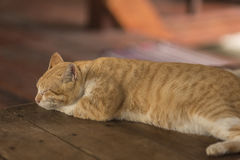 Fat kitty cat sleep on the floor. Royalty Free Stock Images