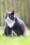 Fat kitty Royalty Free Stock Photos