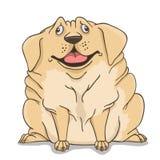 Fat Labrador light Stock Photo