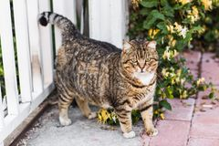 Fat lazy cat Royalty Free Stock Photos