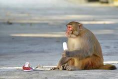 A Fat Monkey Esting Ice Cream Stock Image