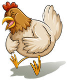 Fat mother chicken Royalty Free Stock Photography