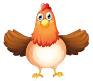 A fat mother hen Stock Photography