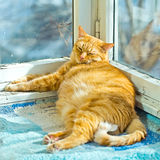 Fat orange cat sleeping on a balcony with sunlight Stock Images