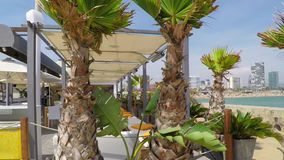 Fat Palm Trees At The Pier stock footage