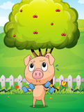 A fat pig exercising near the cherry tree Stock Image
