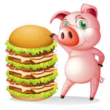 A fat pig beside the giant hamburger Stock Images