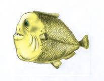 Fat piranha fish (color). Ð¡aricature fat piranha fish with big teeth vector illustration