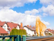 Fat red cat is walking on the fencil in beautiful residential sector of row houses in sunny day with blue sky. Fat red cat is walking on the fencil in beautiful Stock Image
