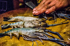 Fat shrimps cutting Royalty Free Stock Photos
