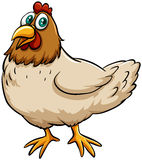 Fat spring chicken Royalty Free Stock Photography