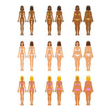 Fat and thin woman, vector illustration, normal, Royalty Free Stock Image