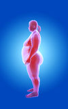 Fat and thin woman. x-ray view Royalty Free Stock Image