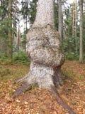 Fat tree Stock Image