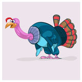 Fat turkey-cock who will be prepared for Thanksgiving Day. Stock Photography