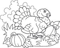 Free Fat Turkey Walking On The Farm Royalty Free Stock Images - 83429899