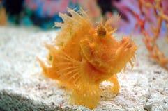 Fatal sea creatures Stock Photography