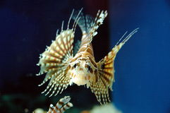 Fatal sea creatures Royalty Free Stock Images