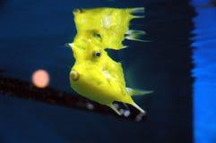 Fatal sea creatures Stock Photos