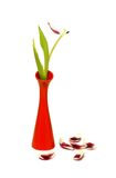 Fated tulip in vase isolated on white Royalty Free Stock Photos