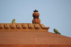Fatehpur Sikri, птицы на крыше Стоковая Фотография