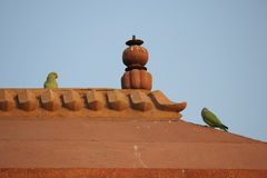 Fatehpur Sikri, birds on the roof Stock Photography