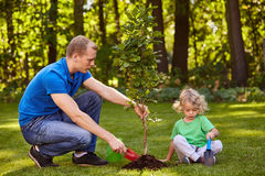 Father and boy planting tree stock photos