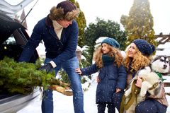 Father brought christmas tree in large trunk of SUV car. Daughter, mother and dog meet dad happily help him with. Father brought christmas tree in large trunk of stock photos