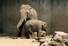 Father and child elephant Stock Photos