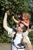 Father with child at garden Royalty Free Stock Photography