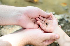 Father and Child holding Tadpole. A father and young daughter holding a tadpole in hand Stock Photos