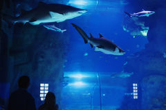 Father with child visitors a  oceanarium Royalty Free Stock Photography