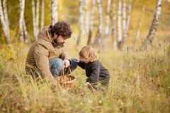 Father and child in the wild forest. Father and child searching mushrooms in the wild forest, dad and kid friendship. Fall day. Little girl exploring nature royalty free stock images