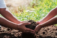 Father and children helping planting small tree. In garden stock photography