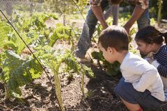 Father And Children Looking At Crops Growing On Allotment royalty free stock photography