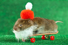 Father Christmas Mouse Royalty Free Stock Photos